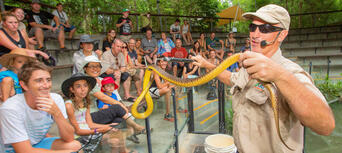 Port Douglas and Hartleys Crocodile Adventures Tour Thumbnail 6