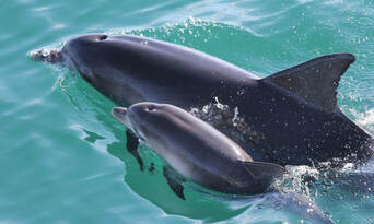 Jervis Bay Dolphin Watching Tour Thumbnail 6