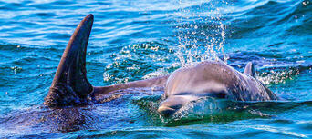 Jervis Bay Dolphin Watching Tour Thumbnail 1
