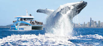 Whale Watching Cruise from Sea World Thumbnail 1