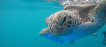 60 Minute Wildlife Eco Bay Cruise from Airlie Beach Thumbnail 2