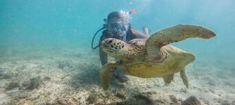 Frankland Islands Reef Cruise & Island Day Tour Thumbnail 3