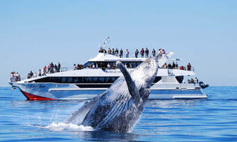 Brisbane Whale Watching Cruise with Lunch from Redcliffe Thumbnail 2