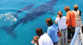 Brisbane Whale Watching Tour with Lunch and Brisbane Transfers Thumbnail 1