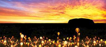 Experience Sunrise Field of Light Thumbnail 1