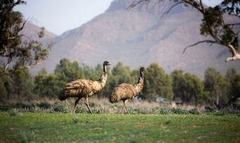 Flinders Ranges 4WD Half Day Aboriginal Cultural Tour Thumbnail 5