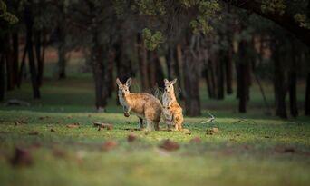 Flinders Ranges 4WD Half Day Aboriginal Cultural Tour Thumbnail 6