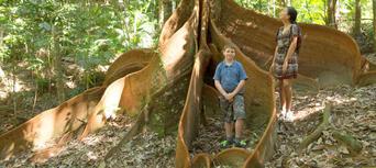 Kuranda Rainforest ATV Quad Bike Tour Thumbnail 5
