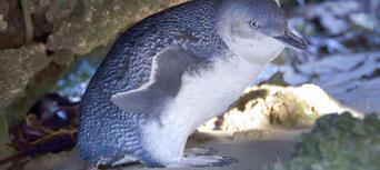 Penguin Island Wildlife Cruise Thumbnail 1