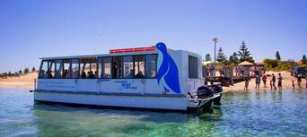 Penguin Island Wildlife Cruise Thumbnail 2