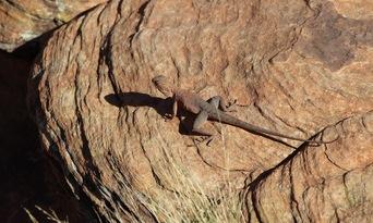 Alice Springs Desert Park and City Sights Full Day Tour Thumbnail 6