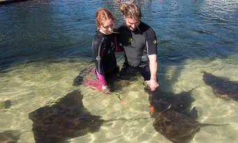 Irukandji Shark & Ray Encounters General Admission Thumbnail 4