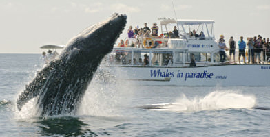 Afternoon Whale Watching Cruise