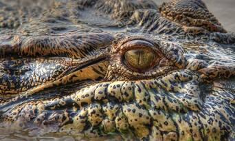 2 Day Kakadu and East Alligator River Tour Thumbnail 5
