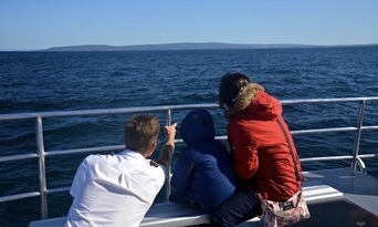 Augusta Whale Watching Experience Thumbnail 2