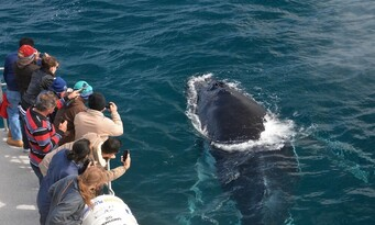 Augusta Whale Watching Experience Thumbnail 5