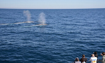 Augusta VIP Captains Lounge Whale Watching Experience Thumbnail 4