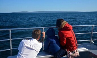 Whale Watching Experience Thumbnail 2