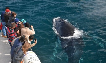 Whale Watching Experience Thumbnail 4
