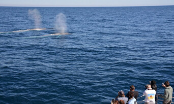 Whale Watching Experience Thumbnail 6