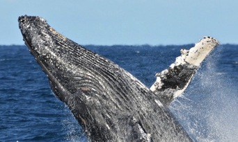 VIP Captains Lounge Whale Watching Experience Thumbnail 2