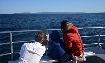 VIP Captains Lounge Whale Watching Experience Thumbnail 4