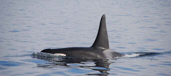 Bremer Canyon Full Day Orca Experience Thumbnail 6
