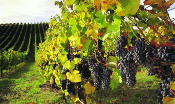 Barossa Valley Wineries and Hahndorf Day Tour Thumbnail 1