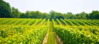 Full Day Mount Tamborine Wine Tasting Tour including Gourmet Lunch Thumbnail 4