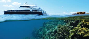 Great Barrier Reef Snorkel and Dive Cruise Thumbnail 6