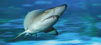 AQWA - The Aquarium of Western Australia Tickets Thumbnail 3