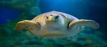 AQWA - The Aquarium of Western Australia Tickets Thumbnail 4