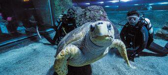 AQWA - The Aquarium of Western Australia Tickets Thumbnail 5