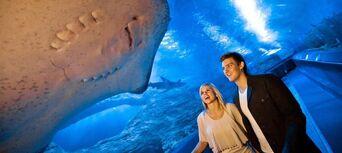 AQWA - The Aquarium of Western Australia Tickets Thumbnail 6
