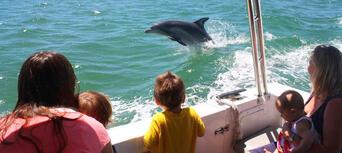 Dolphin Island Adventure Cruise Thumbnail 2