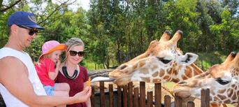 Australia Zoo Entry with Sunshine Coast Hotel Transfers Thumbnail 4