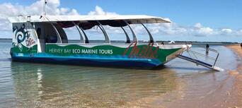 Turtle Discovery Eco Half Day Tour Thumbnail 4