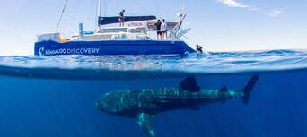 Whale Shark Swim and Catamaran Cruise Thumbnail 3