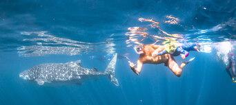 Whale Shark Swim and Catamaran Cruise Thumbnail 5