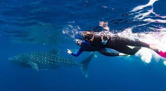 Whale Shark Swim and Catamaran Cruise Thumbnail 1