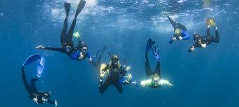 Humpback Whale Swim & Catamaran Cruise Thumbnail 2
