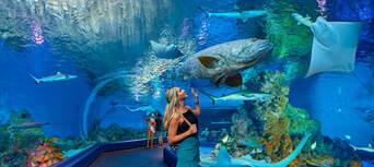 Cairns Aquarium General Admission Thumbnail 1