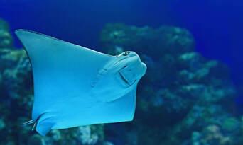 Cairns Aquarium General Admission Thumbnail 2