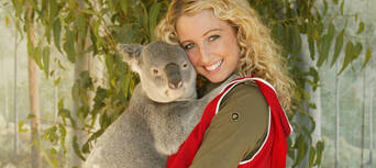 Paradise Country Koala Breakfast Thumbnail 2