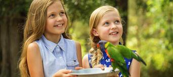 Paradise Country Koala Breakfast Thumbnail 3