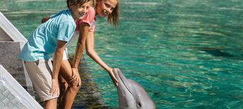 Sea World Dolphin Deep Water Adventure Thumbnail 2