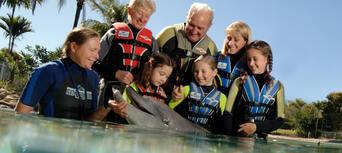 Sea World Dolphin Deep Water Adventure Thumbnail 3