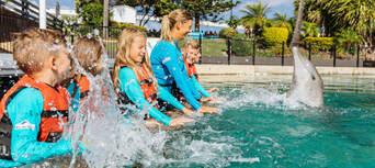 Sea World Dolphin Deep Water Adventure Thumbnail 4