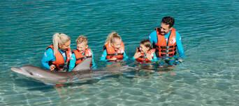 Sea World Dolphin Deep Water Adventure Thumbnail 6