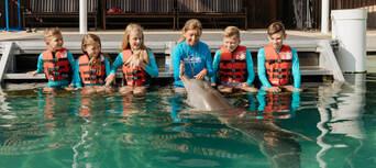 Sea World Dolphin Deep Water Adventure Thumbnail 1